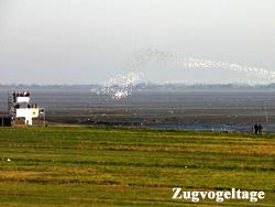 zugvogelarten deutschland liste